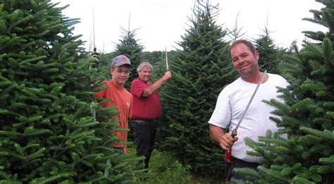 pierre mailhot and son plantations christmas tree grower