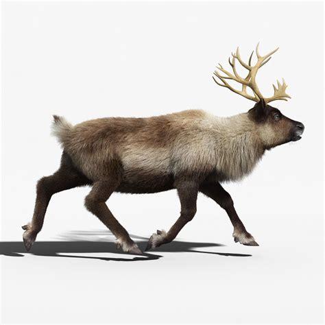 animated reindeer reindeer fur animated 3d model animated rigged max obj