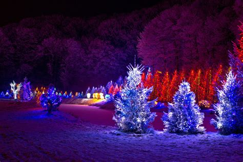 christmas light blue bushes wrapping evergreens and bushes lights in trees outdoors warisan lighting