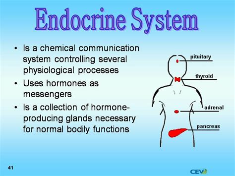 Powerpoint Templates Endocrine System Choice Image Endocrine System Powerpoint