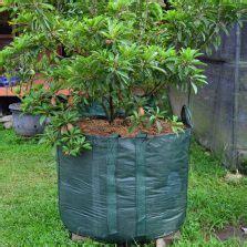 Benih Bunga Matahari Jogja planter bag tomato print 15 liter bibitbunga
