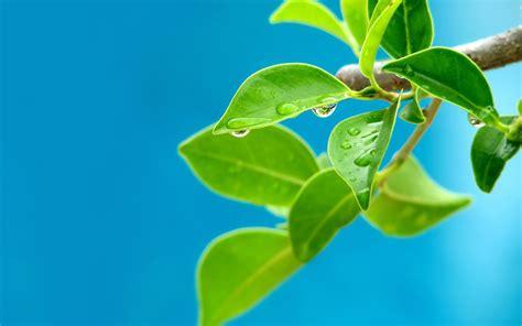 Bilder Aus Getrockneten Blättern by Wassertropfen Auf Den Bl 228 Ttern Hintergrundbilder