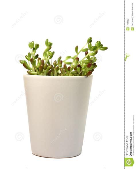 Flowerpot White green plant in white flowerpot royalty free stock photo