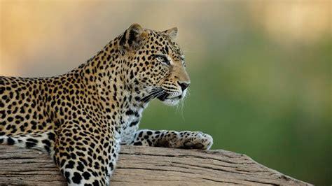 imagenes de animales con w los 20 animales m 225 s fascinantes de 193 frica