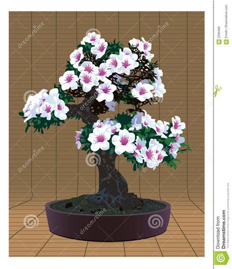 bonsai con fiori albero dei bonsai con i fiori immagine stock libera da