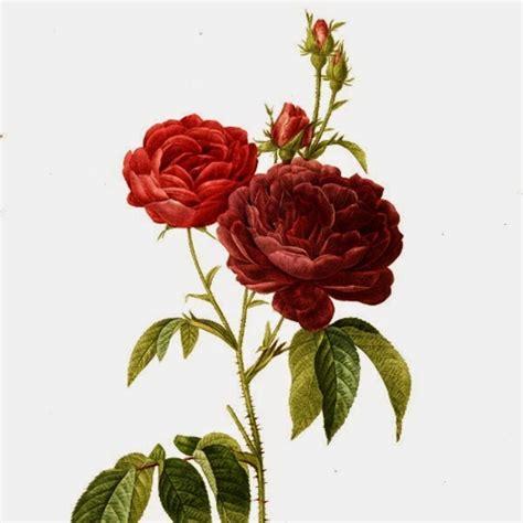 Bunga Mawar Cantik Edisi Bentuk bunga pembawa keberuntungan happykado