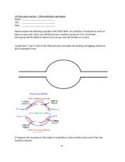 section 10 3 dna replication answers if the dna is labeled with 32 p these complexes can