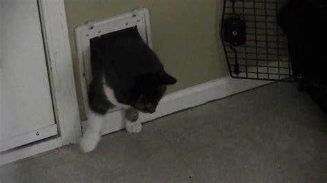 How To Get A Through A Door by Cat Squeezing Through Cat Door