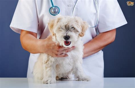 bacterial infection in dogs picture of canine bacterial skininfection and skin