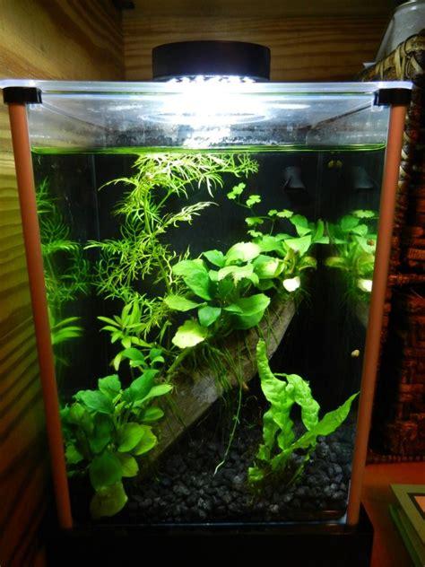 Fluval Spec Aquascape by Planted 2g Fluval Spec W Dario Dario Something Fishy