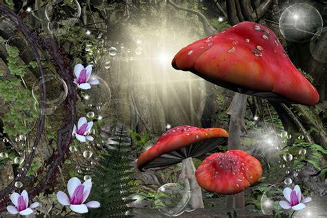 imagenes bonitas bosque de fantasias bosque de fantas 237 a 76465