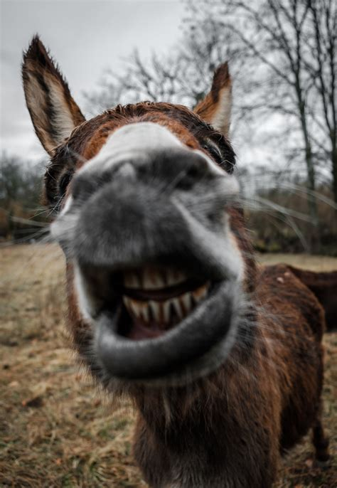 Two Donkeys Two 1 Mountain Eze by Pictures Free Images On Unsplash