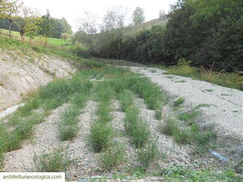 pavia acque progettazione di impianti di fitodepurazione per le acque