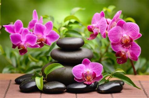 imagenes de flores zen foto mural piedras y flores rosas zen