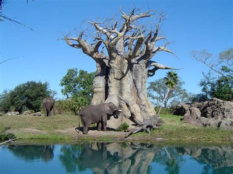imagenes disney animal kingdom orlando pictures traveler photos of orlando central
