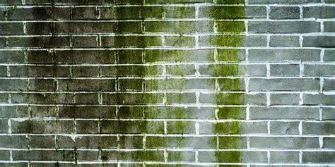 Cara Ml Yg Aman Tanpa Pengaman Cara Aman Membersihkan Lumut Tanpa Bahan Kimia Informasi