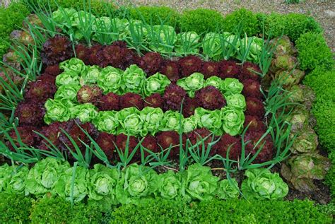 Seed And Garden by Which Vegetable Seeds Can Be Sown In September The Garden Of Eaden