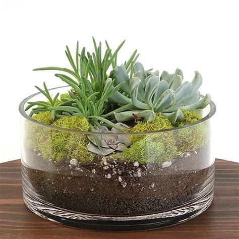succulent kits succulent dish terrarium kit