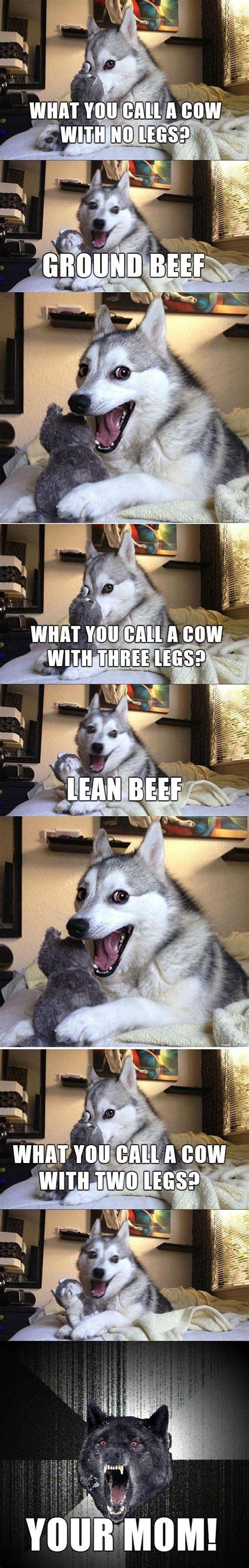 meme  pun dog isnt fat hes    husky