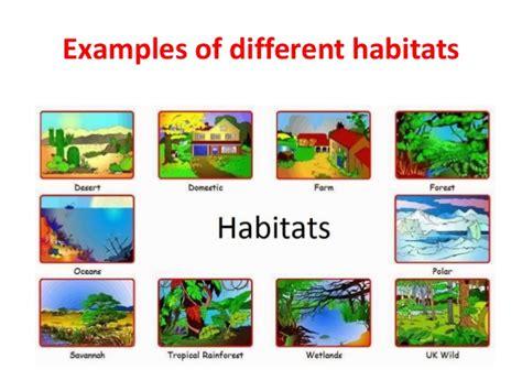 exle of habitat habitat