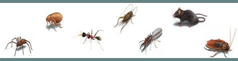 bed bug exterminator nj bed bugs and fleas inspiration bed bugs vs fleas