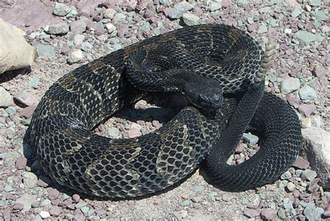pa fish and boat fines snakes in pa mtbr
