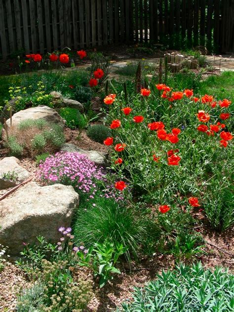 xeriscaped backyard design xeriscaped backyard design outdoor furniture design and