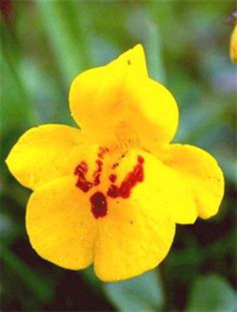 fiori di bach test gratuito 1000 images about fiori di bach on chakra