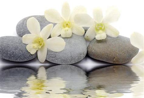 hd wallpapers zen stones reflecting white flowers