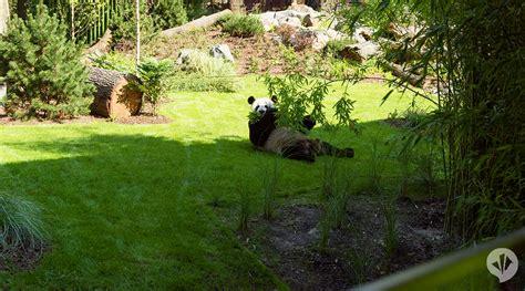 Panda Garden Danpearlman Panda Garden Rock