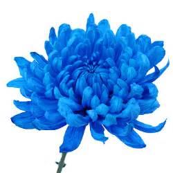 Vintage Flower Arrangement - blue cremon bulk flowers