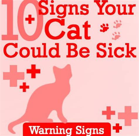 signs your is sick 10 signs your cat could be sick fallinpets