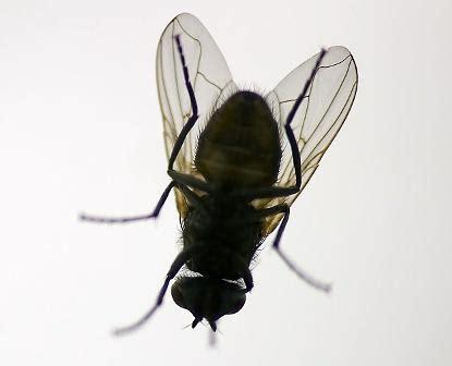 formiche volanti come eliminarle desinfestaci 211 n y moscas imprendo multiservizi