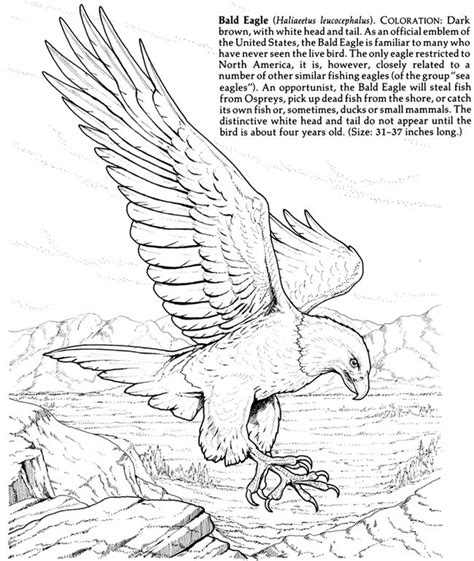 72 best eagle crafts activities for kids images on
