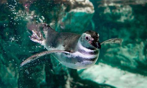 ingresso acquario di genova groupon biglietti acquario di genova a genova citt 224 metropolitana