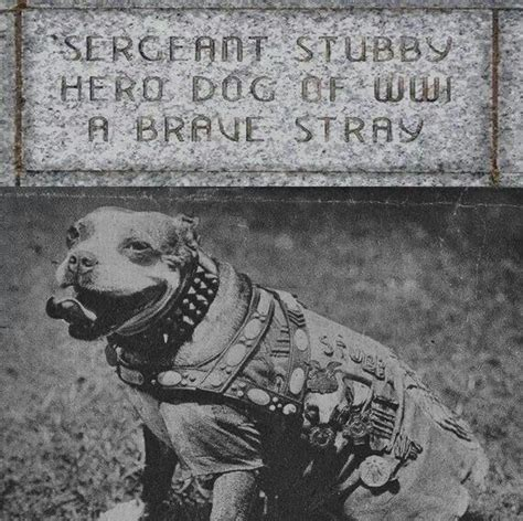 Sergeant Stubby Memorial 98 Best Images About Vintage On The Pit Bull And Civil War Heroes