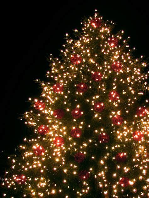 kostenloses foto weihnachtsbaum weihnachten