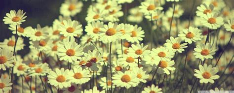 sunflower tumblr picture nature hd wallpaper