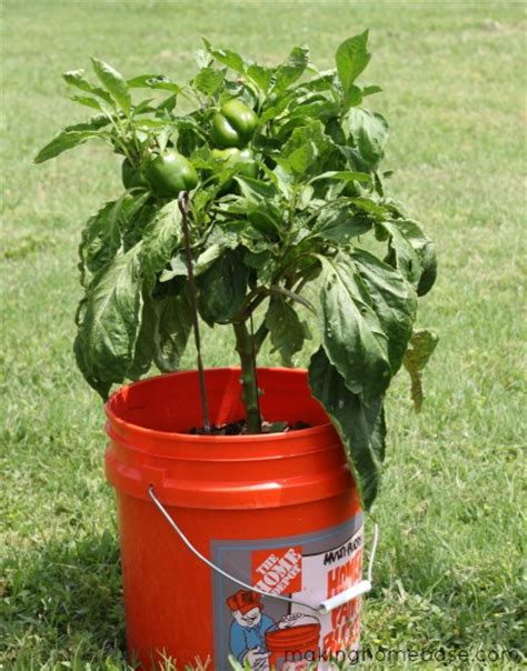 Gardening Container Ideas Container Gardening