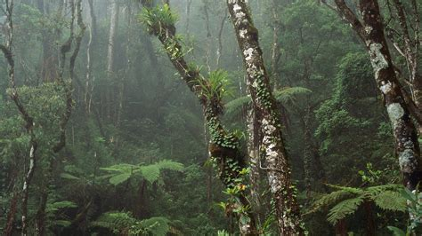 nature cloud forest mount kinabalu national park borneo