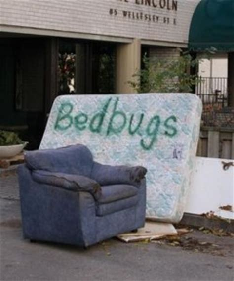 how to clean a couch with bed bugs more bed bugs breach hospitals how do you get rid of