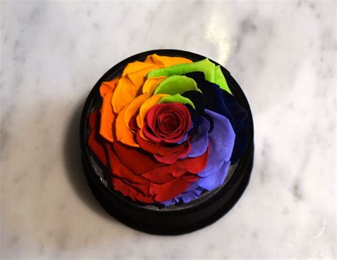Bloom Box Big Rainbow Mesmerizing Preserved Flower te amo floristeria will make you fall in with flowers more look at their studio