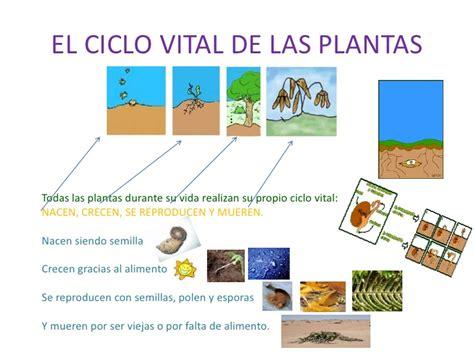 olguchiland las plantas ii el reino de las plantas paula carreras