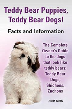 puppies facts 1000 ideas about teddy puppies on puppy shichon puppies for