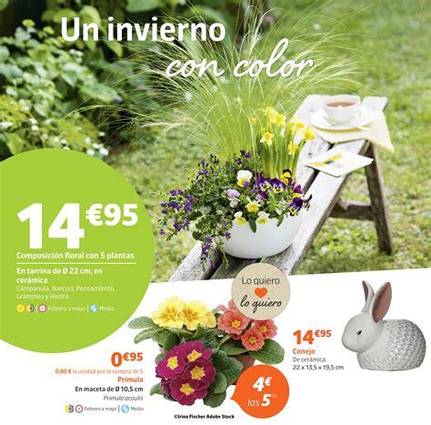 precios de plantas de interior plantas de interior precios latest kokedama with plantas