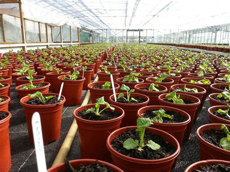 Walled Garden Nursery Starting A Plant Nursery Business Uk Thenurseries