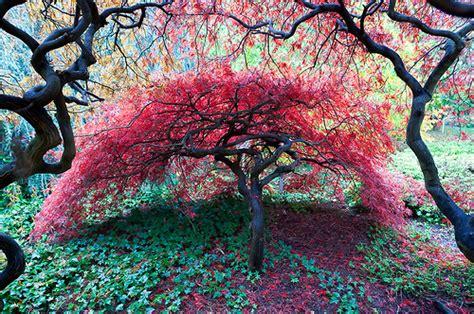 pretty nature image 2435793 by miss dior on favim com