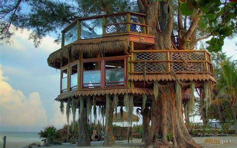 tree house coding treehouse desktop wallpaper wallpapersafari