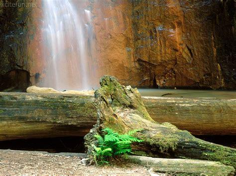 beautiful nature images most beautiful nature wallpapers xcitefun net