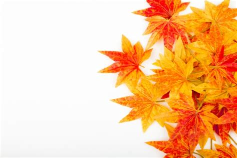 Autumn Leaves Isolated Vectors Photos And Psd Files Free Download Fall Leaves On White Background